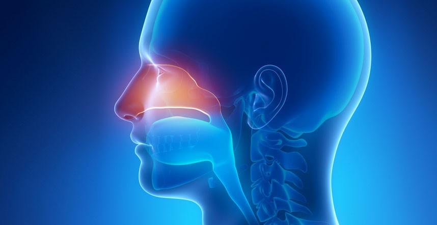 Naso chiuso i rimedi naturali per la congestione nasale for Orecchie a sventola rimedi naturali per adulti