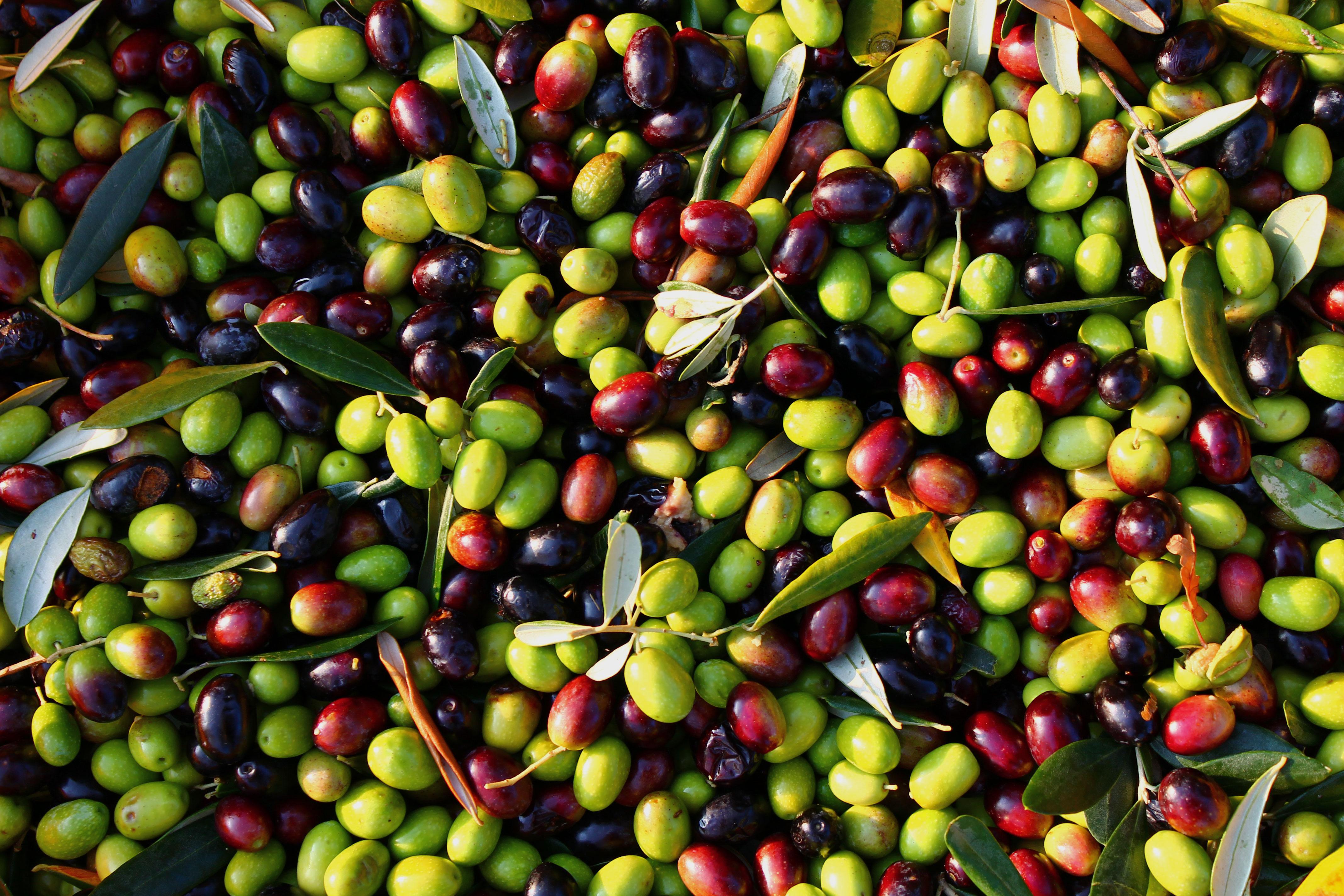 Olive: alla scoperta delle loro straordinarie virtù benefiche