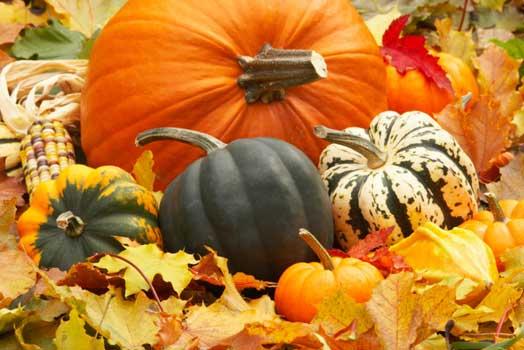 Ecco i cibi di stagione che fanno bene al corpo umano durante l'autunno
