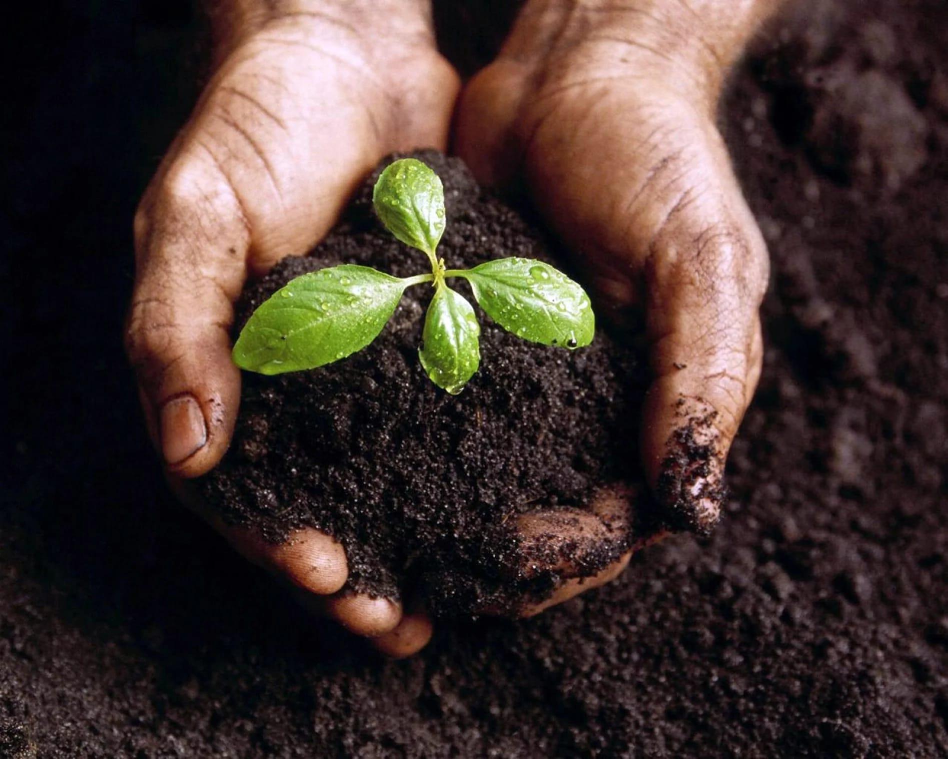 Risultati immagini per agricoltura amica dell'ambiente