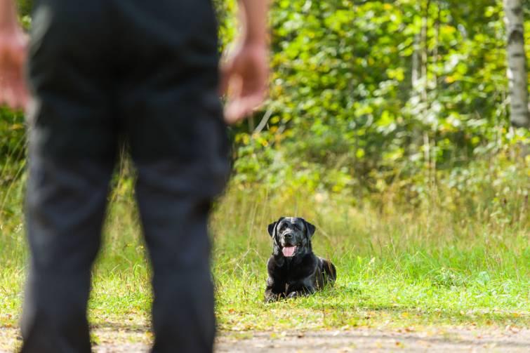 Se il tuo cane ignora un comando non significa che è disubbiedente, ma semplicemente lo ritiene inutile