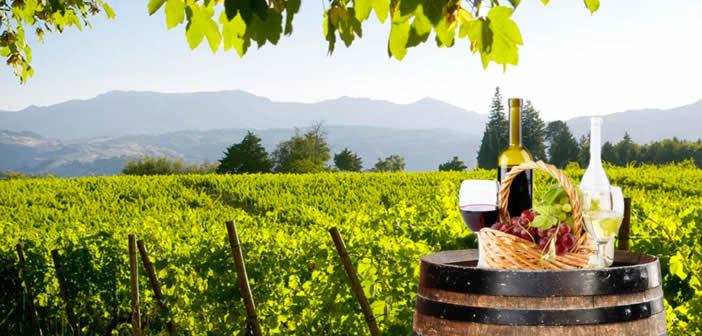 """Perché il vino dei Castelli è leggero, vivace e beverino? L'esperto: """"Siamo sul vulcano laziale"""""""