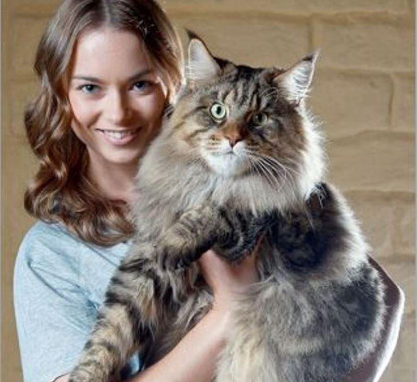 Scatti felini la mostra con i gatti pi grandi del for I piu fighi del mondo