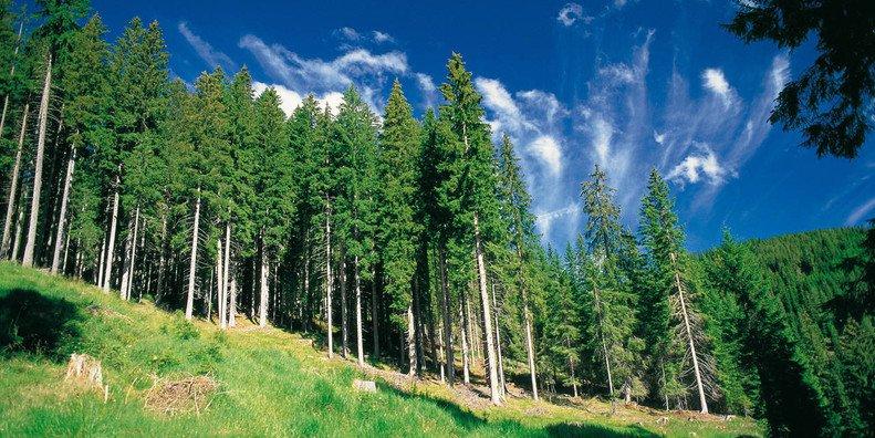 In trentino alla scoperta della surreale foresta dei for Cabine della foresta lacustre