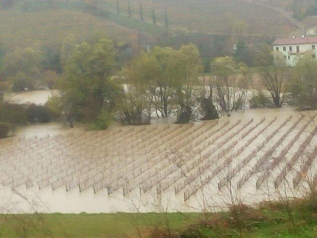 Maltempo, piogge torrenziali in Friuli Venezia Giulia: ricerche per anziano scomparso, fiumi in piena e allagamenti