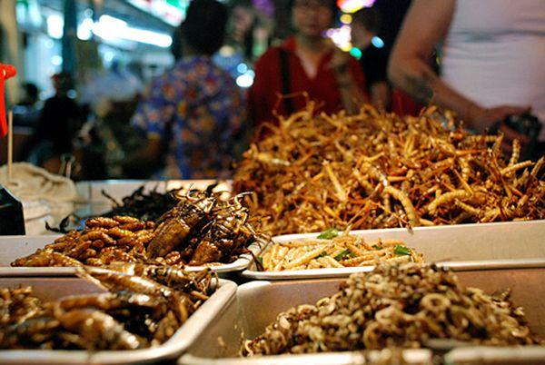 Alimentazione gli insetti sono il cibo del futuro in for Mangiare cinese