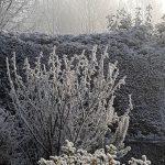 Freddo, risveglio polare su gran parte d'Italia: domenica di gelo con galaverna e neve chimica al Nord [GALLERY]