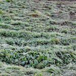 Freddo al Sud, gelo nel Salento: temperature fino a -3°C in pianura! [GALLERY]