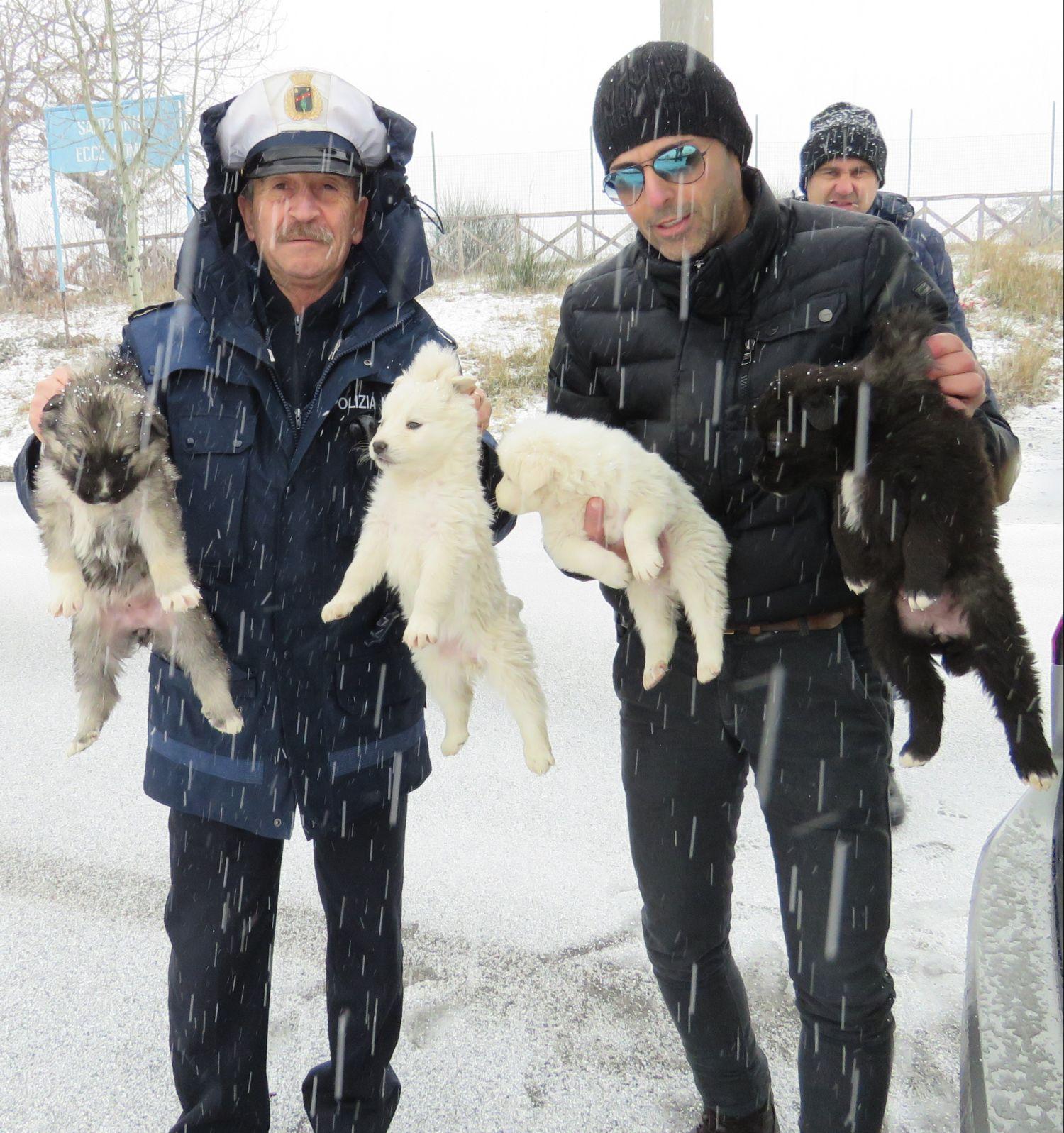La polizia provinciale salva quattro cuccioli abbandonati for Meteo san giovanni in fiore