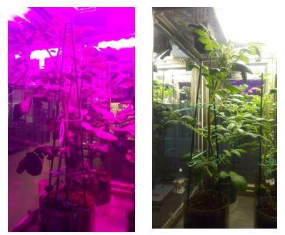 Agricoltura una serra hi tech per studiare le piante del futuro