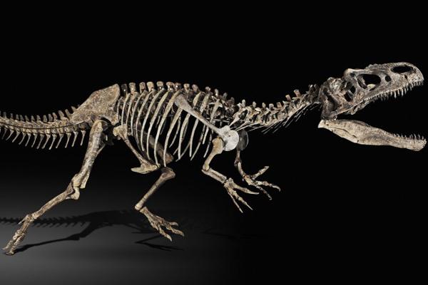 Risultati immagini per dinosauro marocchino a Parigi