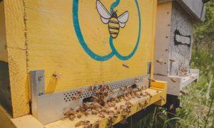 api-roma-progetto