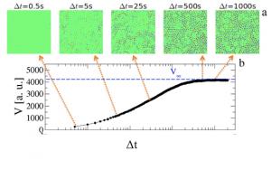 a) Sequenza di differential frame per differenti intervalli di tempo. b) Varianza dell'intensità in funzione del tempo. Al passare del tempo, sempre più particelle si muovono dalla posizione originale producendo un aumento della varianza. A tempi lunghi, il sistema ha completamente rilassato e la varianza raggiunge un plateau