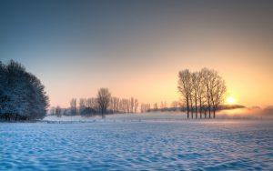 Foggy Winter Sunrise Snow Tree Fog Fullscreen Wallpaper