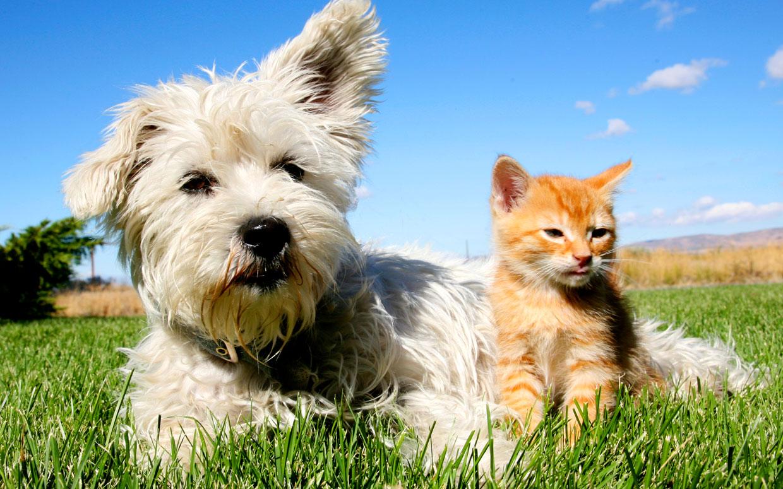 Animali Cani Più Intelligenti Dei Gatti Hanno Il Doppio Dei