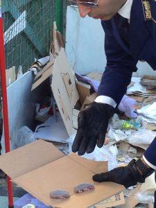 polizia provinciale salva una famigliola di ricci