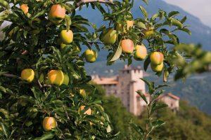 Trentino, Pomaria ancora più ricca: ad ottobre la festa delle mele e delle eccellenze gastronomiche della Val di Non