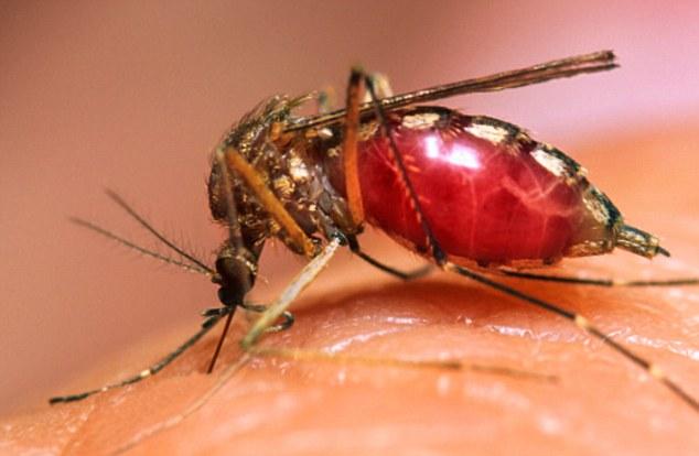 Malaria, anche l agro di Montescaglioso sarà monitorata