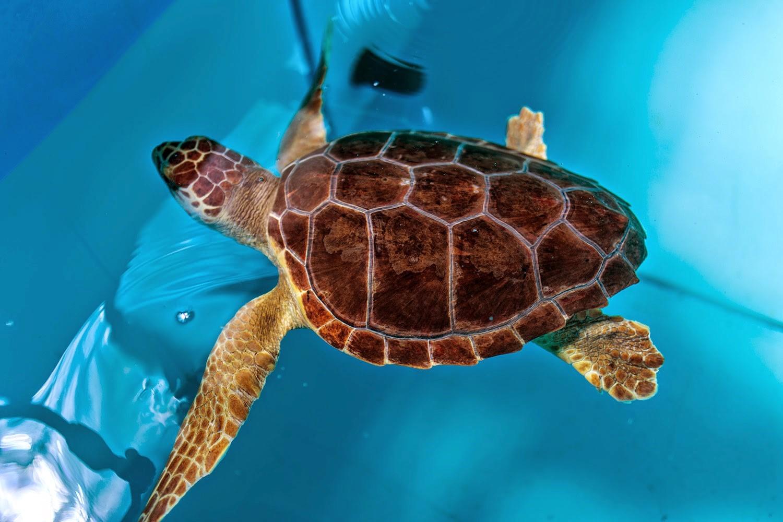 Giornata mondiale delle tartarughe allarme del wwf for Vasche di plastica per tartarughe