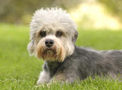 Animali I Cani Fanno Gli Occhi Dolci Solo Agli Umani Lo
