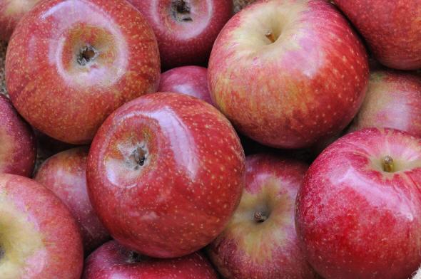 La mela annurca rimedio per la caduta di capelli durante la chemioterapia