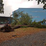 """La Tempesta """"Xavier"""" devasta la Germania: 7 morti e treni bloccati, 10mila persone senza elettricità [GALLERY]"""