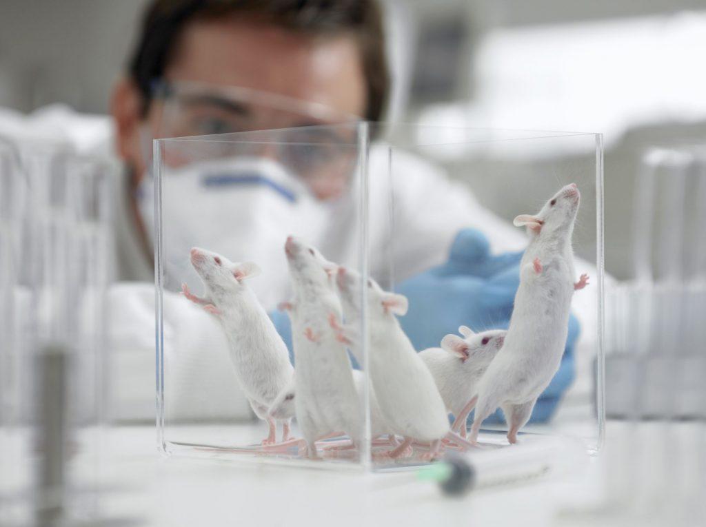 esperimenti topi