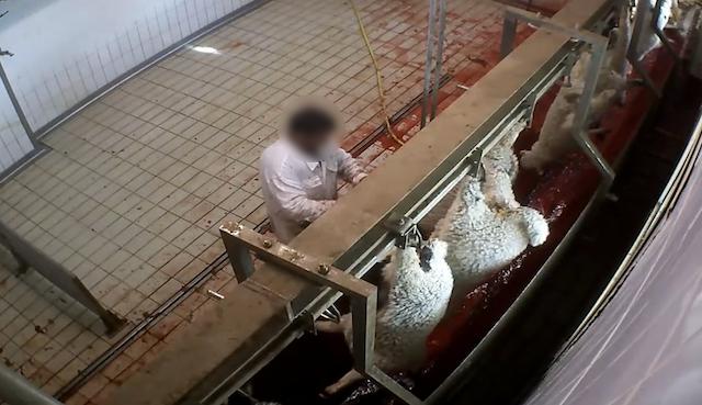 Macellazione animali