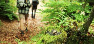 camminare sul bosco