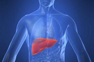 Fegato: aumentano le prove dei benefici dei probiotici, i ba