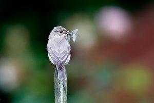 uccello mangia insetto