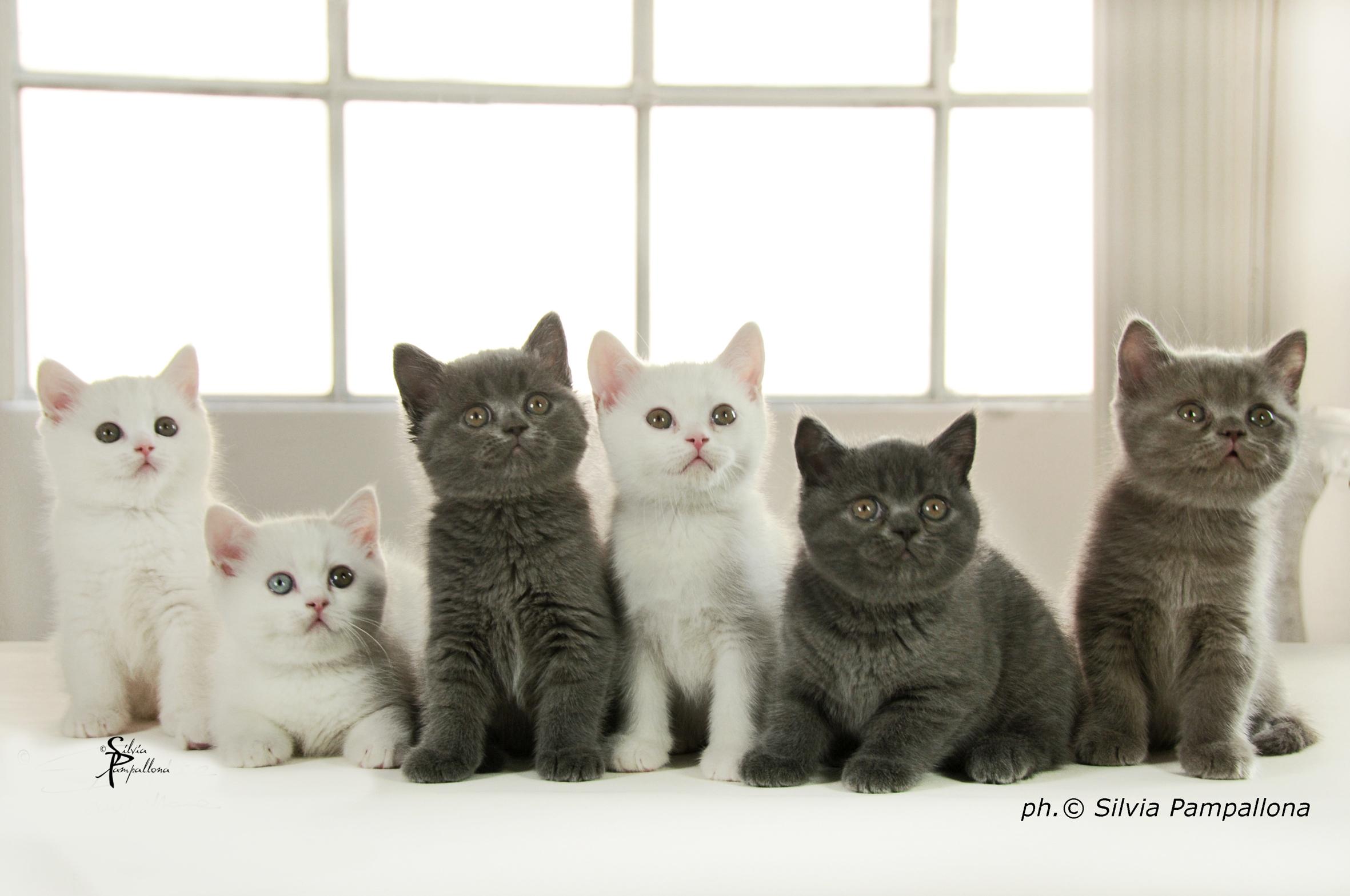 Arrivano a padova i gatti pi belli del mondo meteo web for Fiera arredamento padova