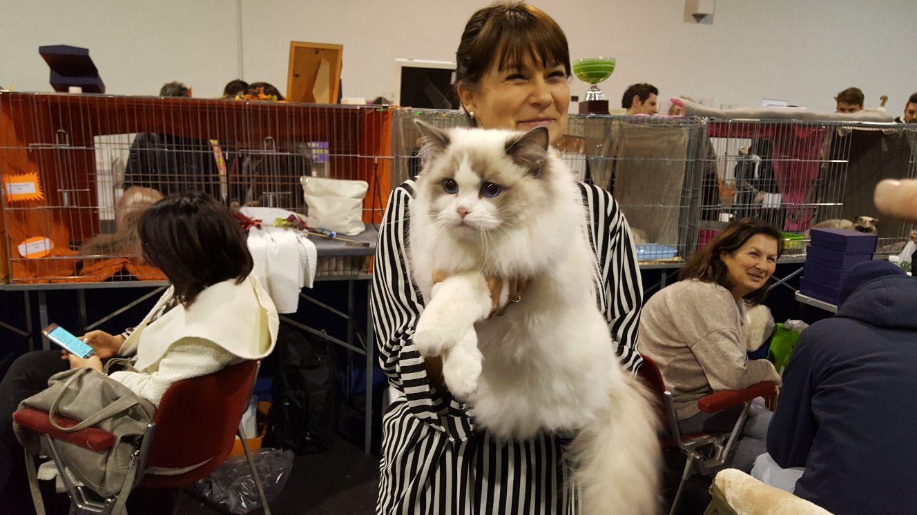 Il Gatto Più Bello è Un Maine Coon Di Pavia Oltre 5000 All