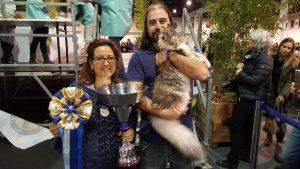 Il gatto più bello è un Maine Coon di Pavia: oltre 5.000 all'esposizione internazionale felina di Padova [FOTO]
