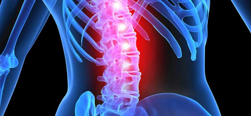 midollo spinale