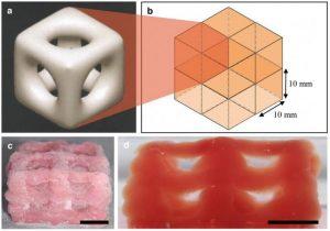 stampa 3D organi