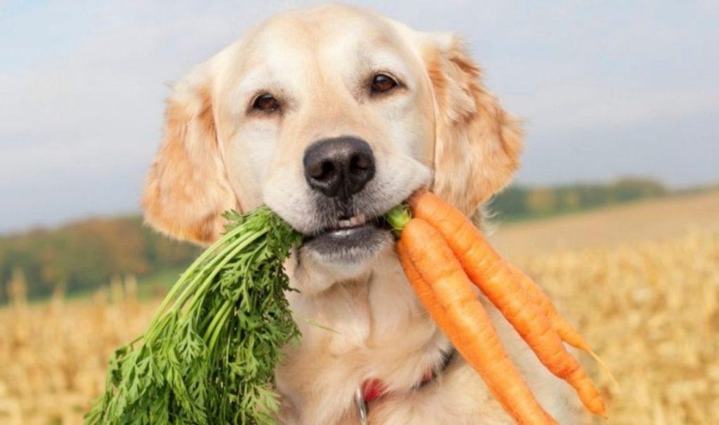 dieta animali