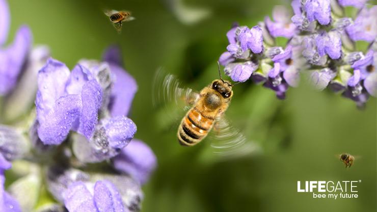 api lifegate