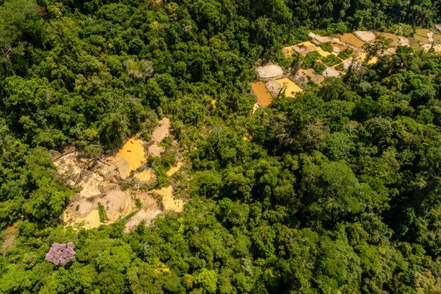 Giornata Mondiale delle Foreste: Greenpeace denincia tagli i