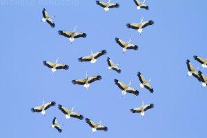 Terna migrazioni uccelli Stretto di Messina