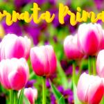 Equinozio 2018, buongiorno e buon primo giorno di Primavera! Ecco le IMMAGINI da condividere su Facebook e WhatsApp [GALLERY]