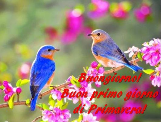 Equinozio 2018, buongiorno e buon primo giorno di Primavera!