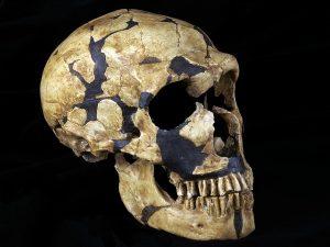 la ferrassie 1 scheletro neanderthal