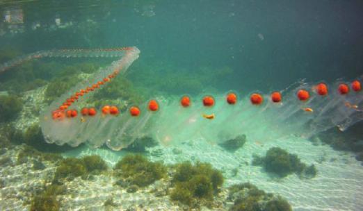 Caldo record, rarissime specie tropicali invadono i mari e l