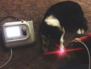 Tecnologie per i veterinari applicate