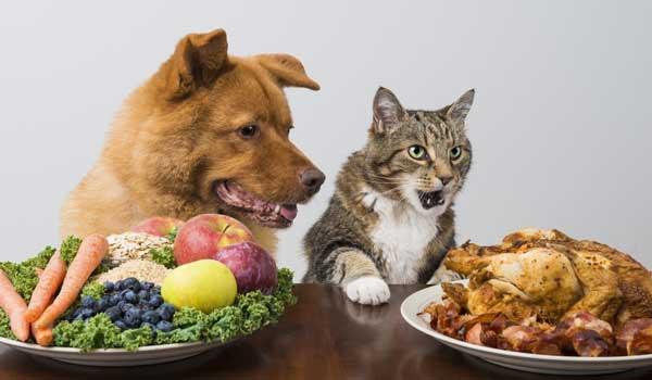 alimentazione cane e gatto