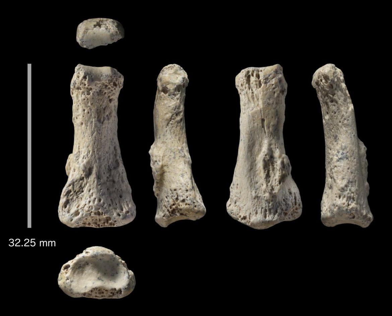 fossile Homo Sapiens Arabia Saudita