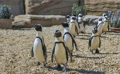 pinguini zoomarine onlus