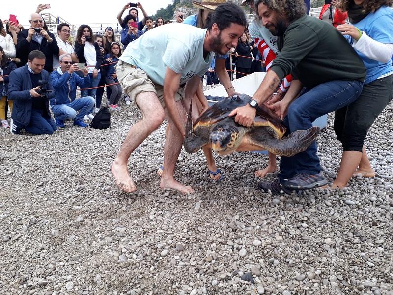Tartaruga Punta Campanella