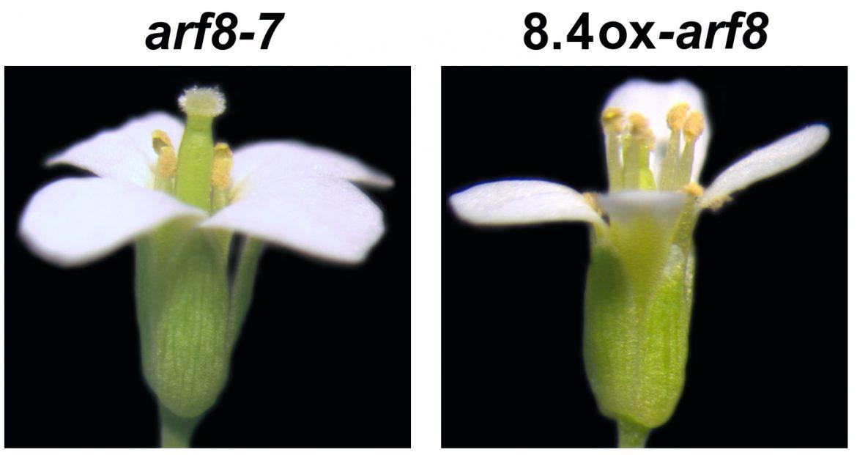 cnr piante gene